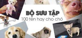 Những cái tên cho chó cưng, các cái tên ấn tượng nhất cho cún cưng