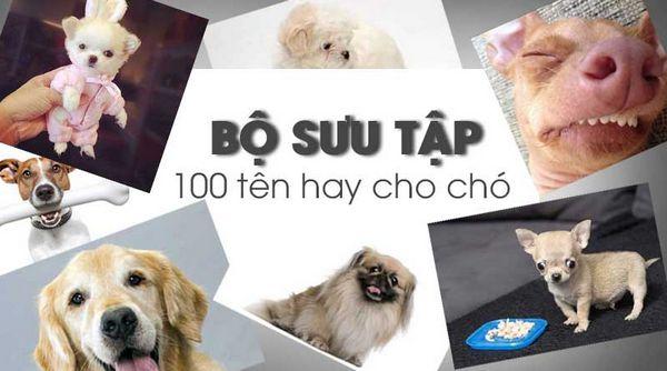 ten-cho-cho