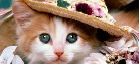 Tuyển tập những cái tên cho mèo cưng hay, ý nghĩ và sang chảnh nhất